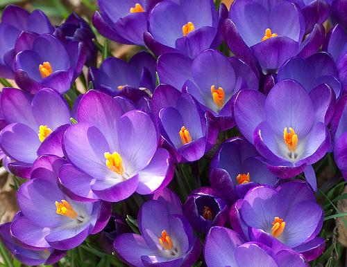 I lavori di marzo la cassa il paese la gente le idee for Fiori primaverili da giardino